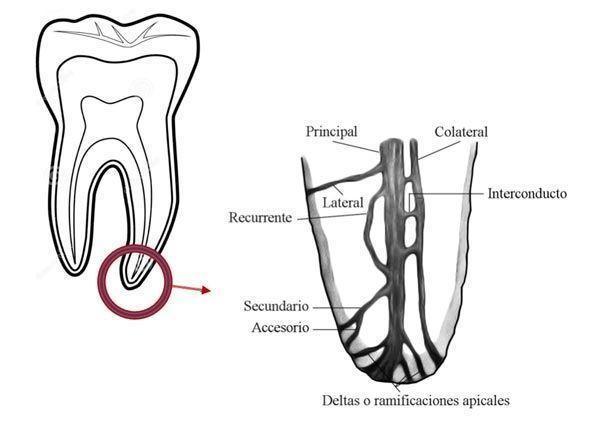 endodoncias-bn